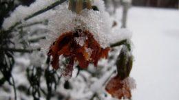 260x146 - Перший сніг у Житомирі: деталі та прогноз погоди на зиму