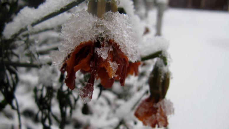 .jpg - Перший сніг у Житомирі: деталі та прогноз погоди на зиму