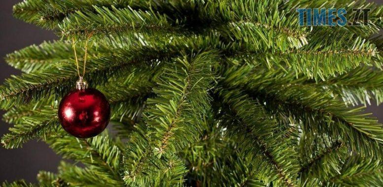 320051 e1576230853393 - Скільки коштуватиме новорічна ялинка у Житомирі