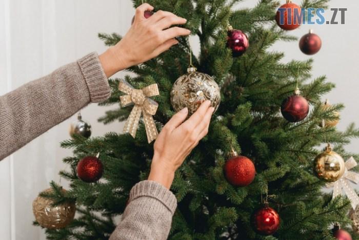 564565465 - Скільки коштуватиме новорічна ялинка у Житомирі