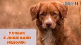 67603745 2379314925684435 7597570595689070592 n 260x146 - В Житомирі шукають волонтерів для підрахунку вуличних собак