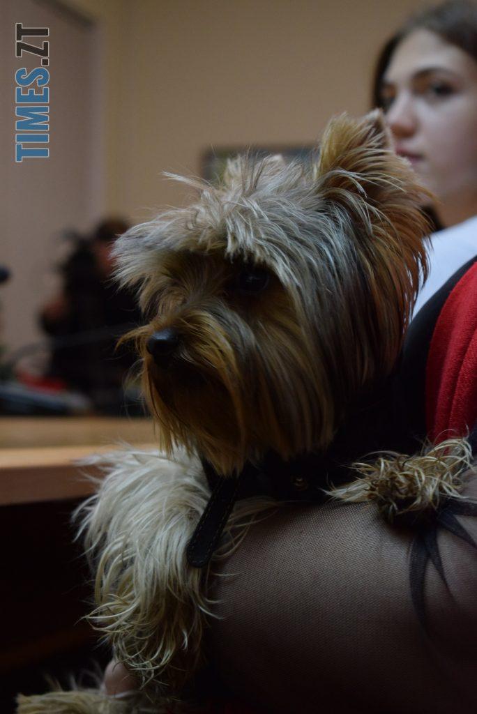 DSC 0005 4 e1573301236807 684x1024 - Житомирянка створила мобільний додаток на допомогу власникам  домашніх тварин