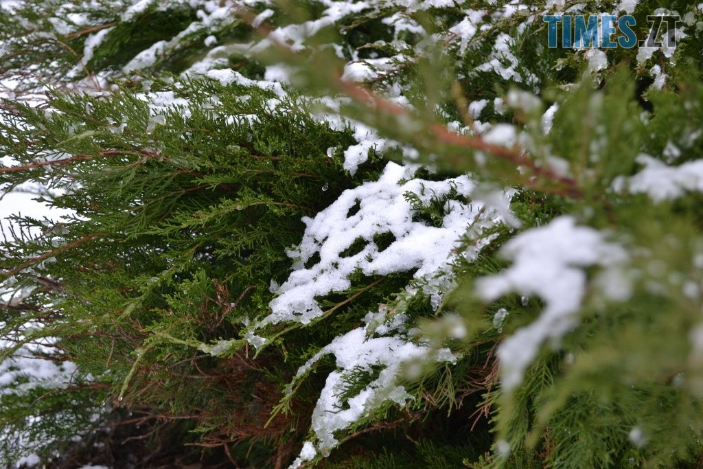 DSC 0011 15 1024x683 - У Житомир ненадовго зазирнула зима(ФОТО)