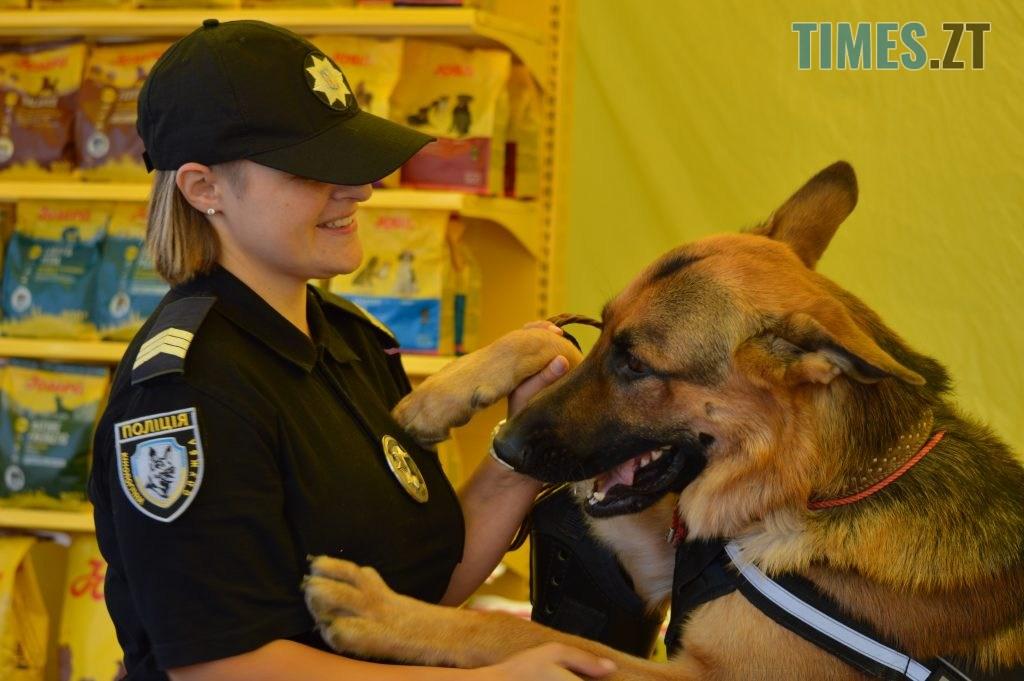 DSC 0026 1024x681 - В Житомирі службові собаки змагаються в чемпіонаті з багатоборства кінологів (ФОТО)