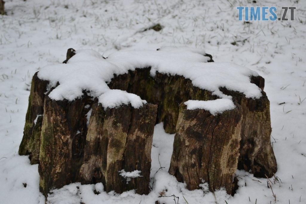 DSC 0104 6 1024x683 - У Житомир ненадовго зазирнула зима(ФОТО)