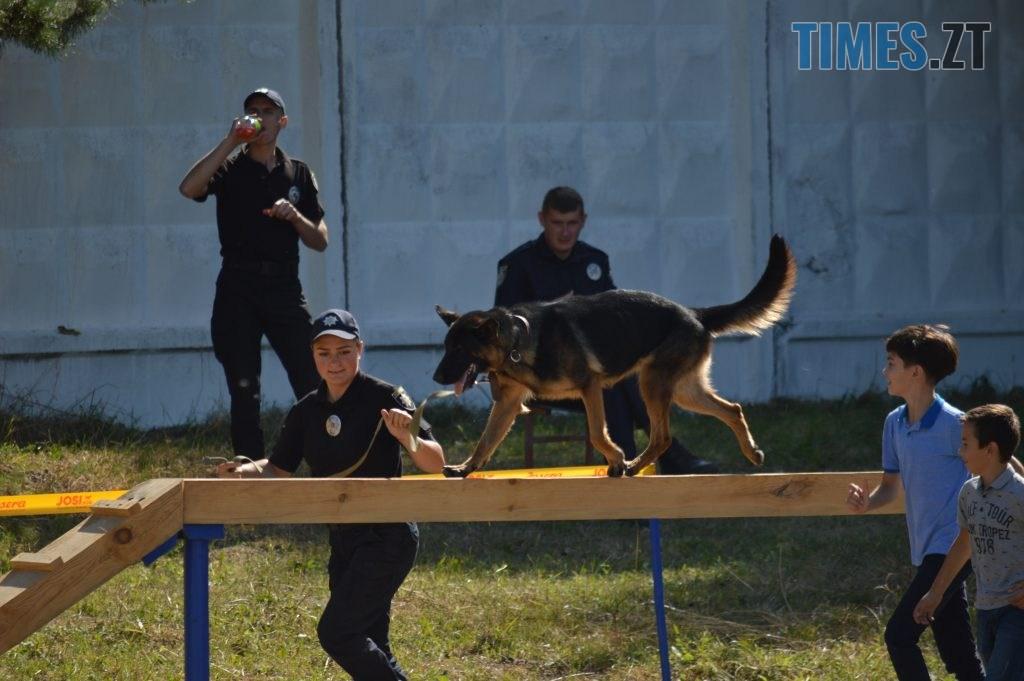 DSC 0147 1024x681 - В Житомирі службові собаки змагаються в чемпіонаті з багатоборства кінологів (ФОТО)