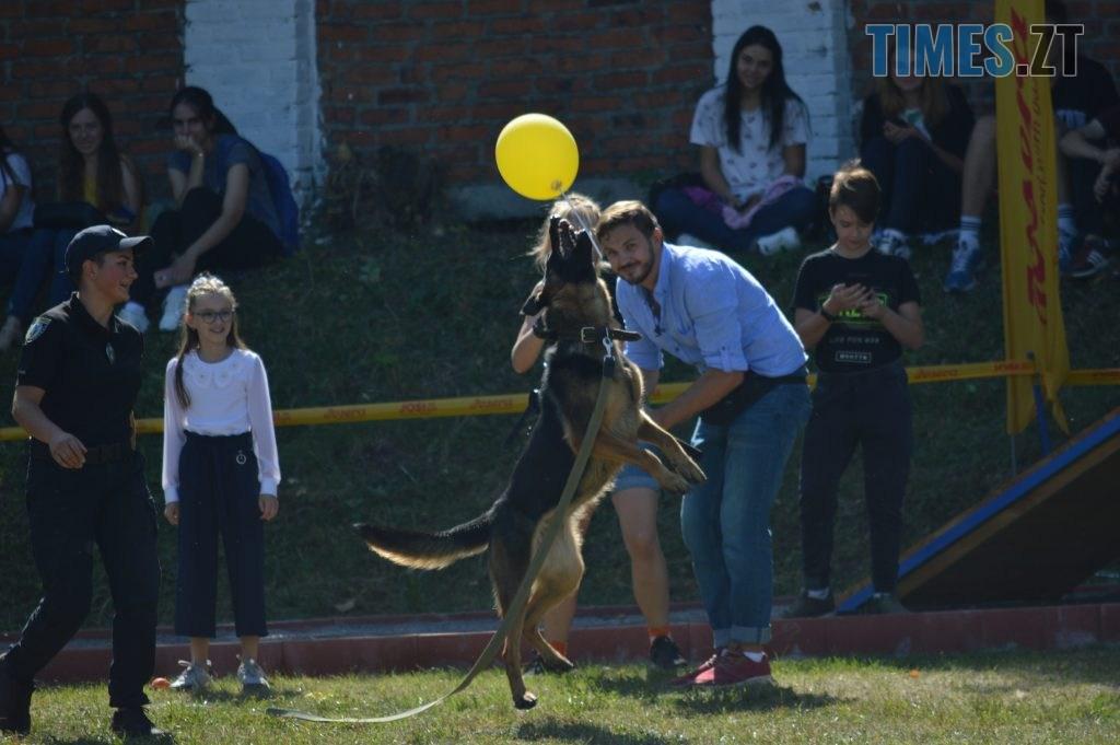 DSC 0162 1024x681 - В Житомирі службові собаки змагаються в чемпіонаті з багатоборства кінологів (ФОТО)