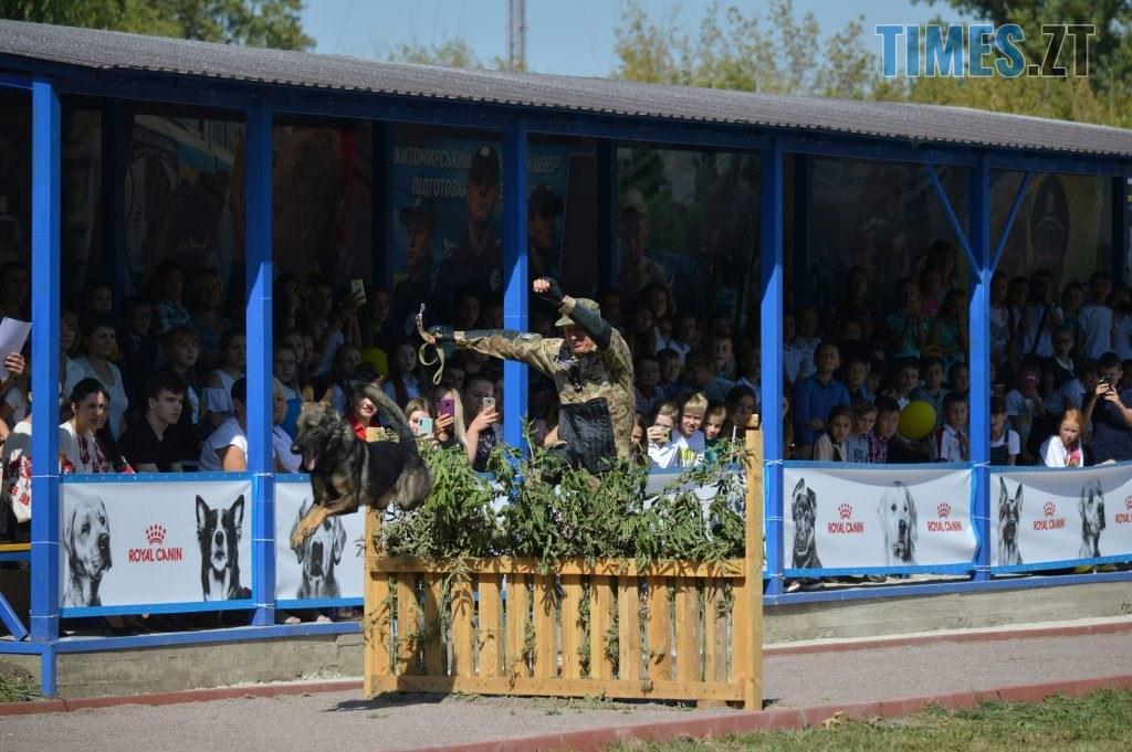 DSC 0190 1024x681 - В Житомирі службові собаки змагаються в чемпіонаті з багатоборства кінологів (ФОТО)
