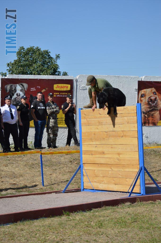 DSC 0200 e1568113127883 681x1024 - В Житомирі службові собаки змагаються в чемпіонаті з багатоборства кінологів (ФОТО)