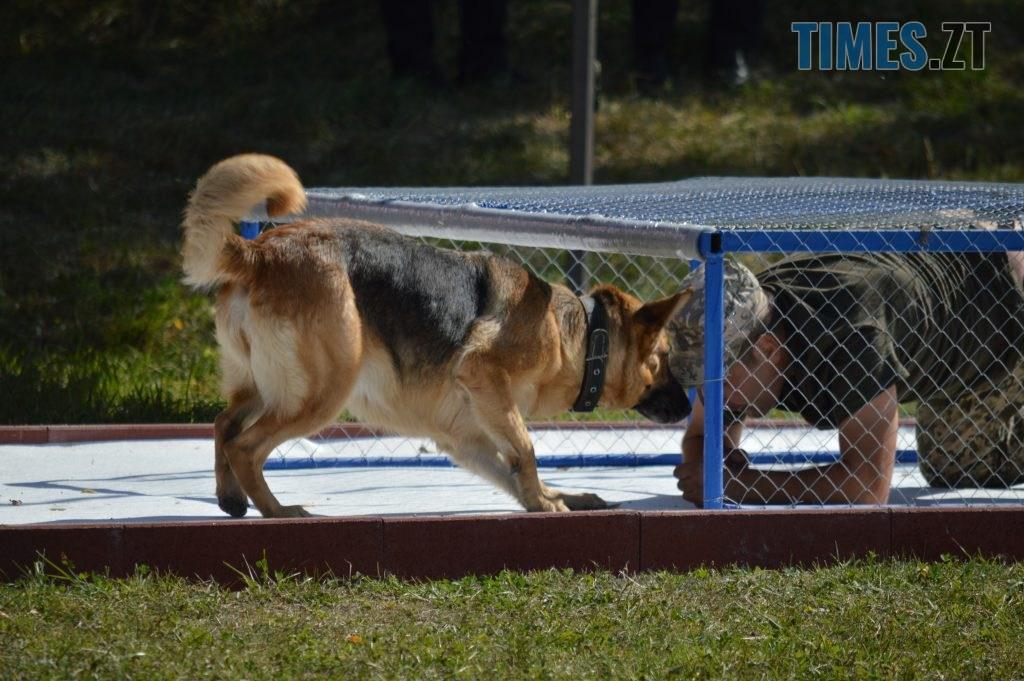 DSC 0211 1 1024x681 - В Житомирі службові собаки змагаються в чемпіонаті з багатоборства кінологів (ФОТО)