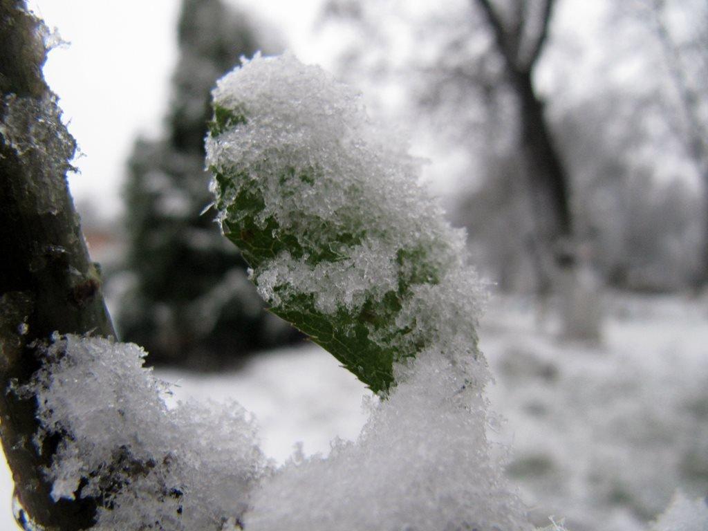 IMG 7922 - Перший сніг у Житомирі: деталі та прогноз погоди на зиму