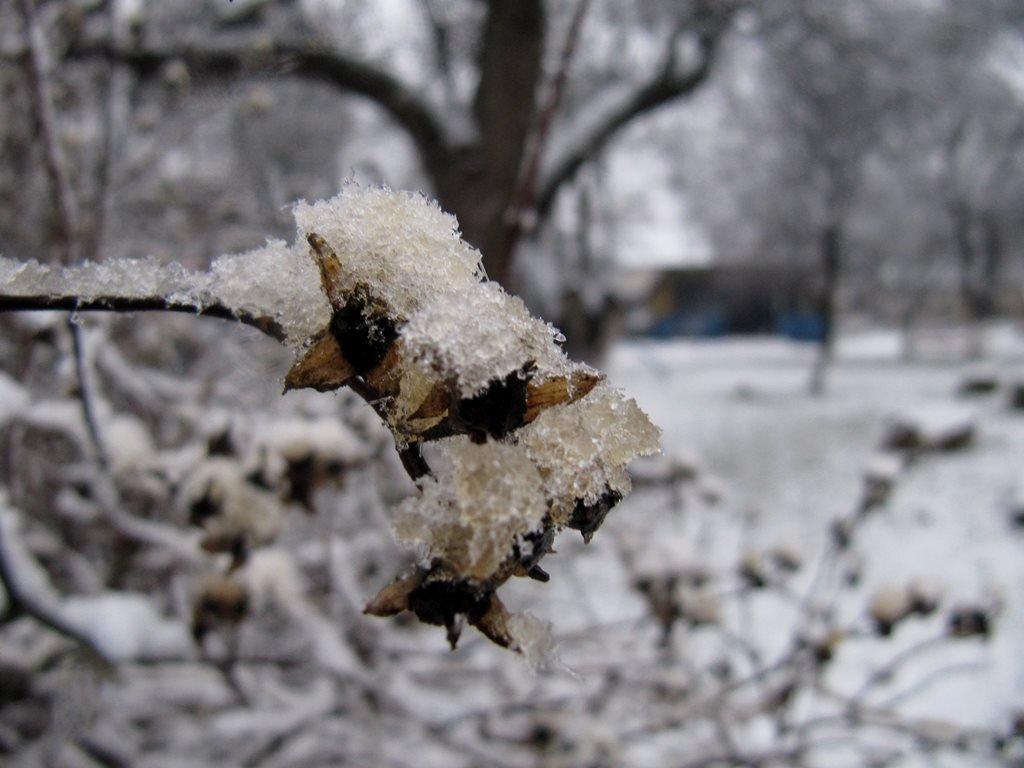 IMG 7927 - Перший сніг у Житомирі: деталі та прогноз погоди на зиму