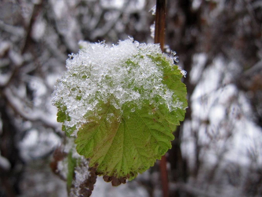IMG 7929 - Перший сніг у Житомирі: деталі та прогноз погоди на зиму