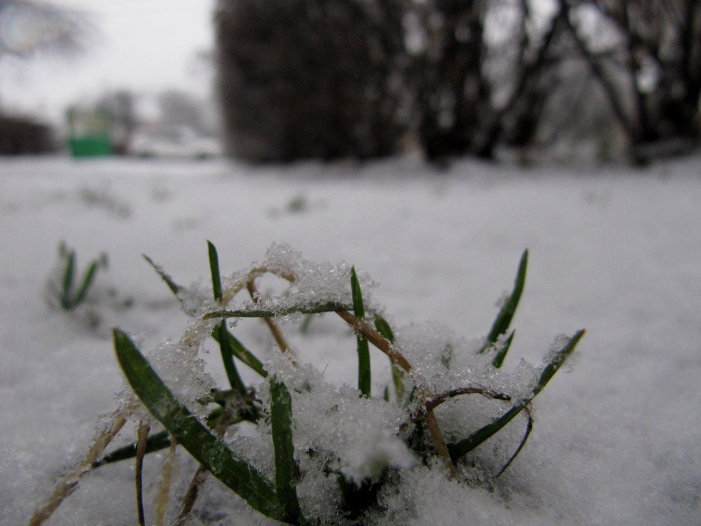 IMG 7932 - Перший сніг у Житомирі: деталі та прогноз погоди на зиму