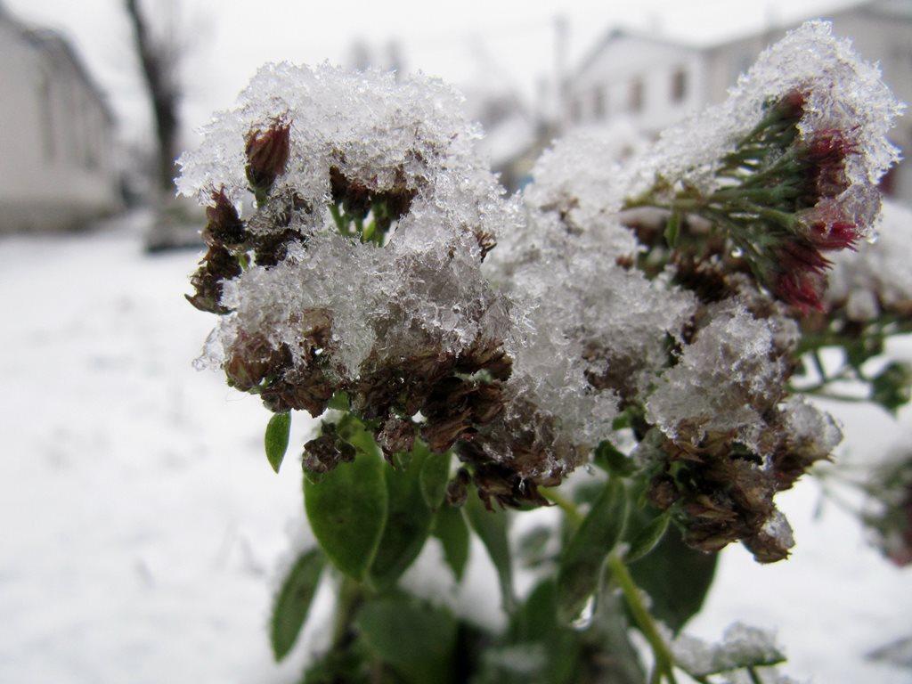 IMG 7934 - Перший сніг у Житомирі: деталі та прогноз погоди на зиму