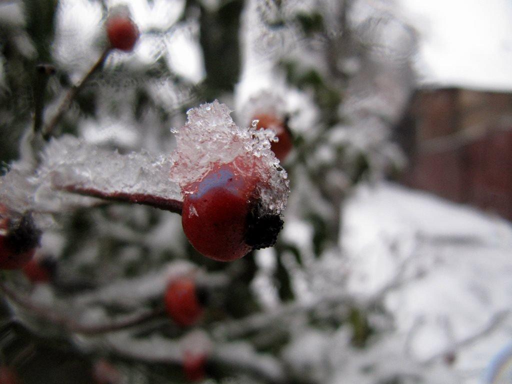 IMG 7941 - Перший сніг у Житомирі: деталі та прогноз погоди на зиму