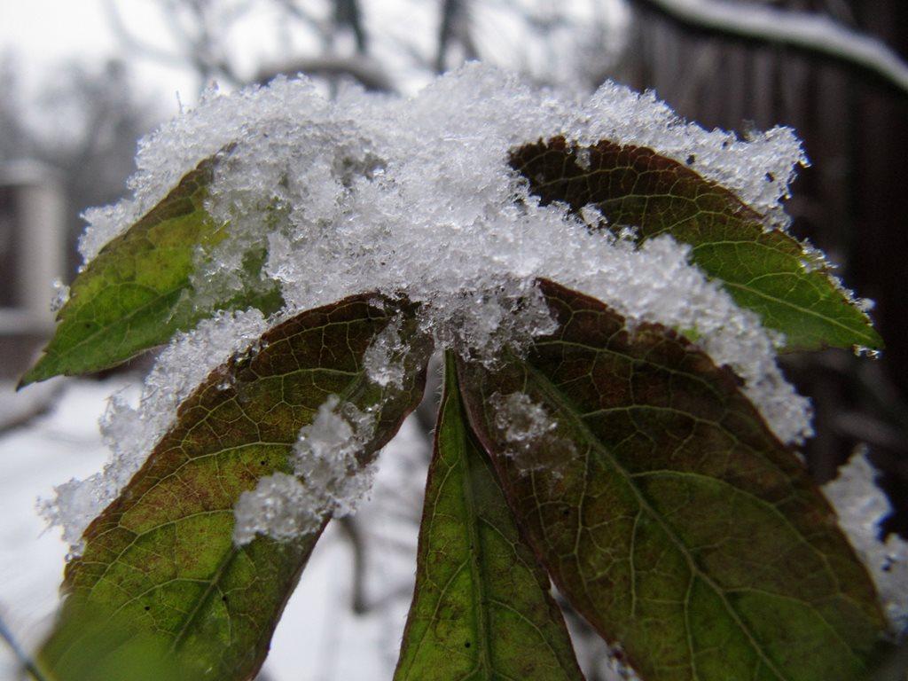 IMG 7945 - Перший сніг у Житомирі: деталі та прогноз погоди на зиму
