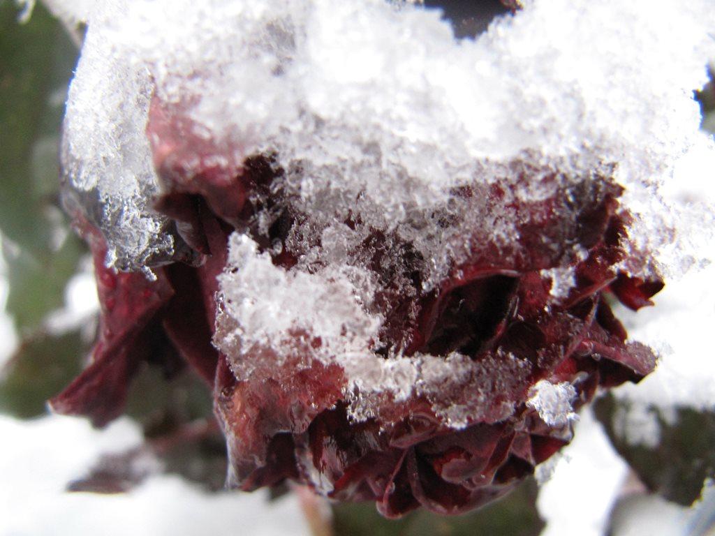 IMG 7958 - Перший сніг у Житомирі: деталі та прогноз погоди на зиму