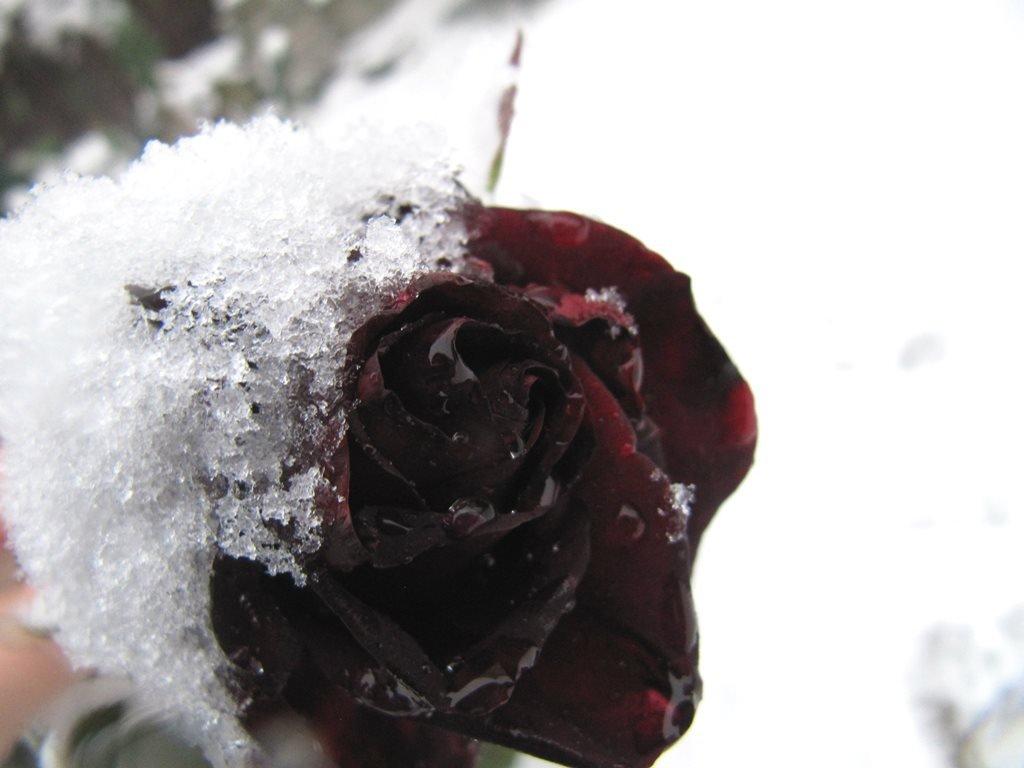 IMG 7963 - Перший сніг у Житомирі: деталі та прогноз погоди на зиму