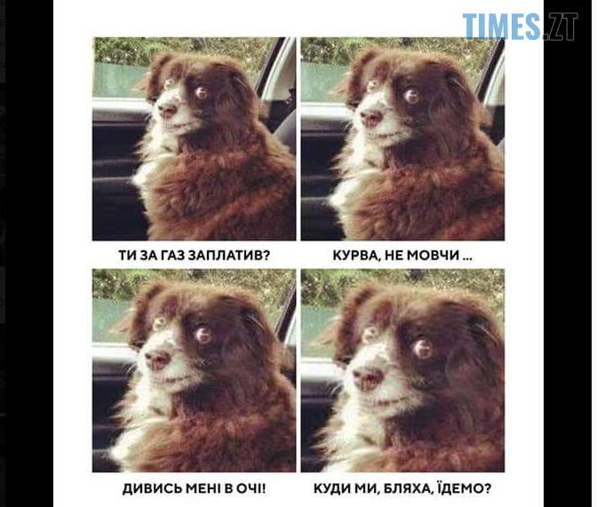 """Screenshot 10 1 - """"Собака""""-Брагар та песо-валюта: соцмережі потішаються над недоумком-""""слугою""""(БАГАТО МЕМІВ)"""