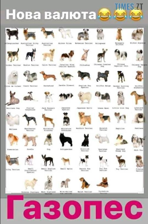 """Screenshot 3 3 - """"Собака""""-Брагар та песо-валюта: соцмережі потішаються над недоумком-""""слугою""""(БАГАТО МЕМІВ)"""
