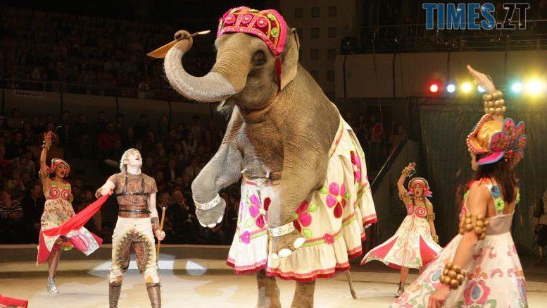 cropped 1224983 290953 39x228548 e1580115668566 - У Житомирі планують заборонити мобільні цирки та зоопарки