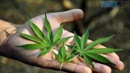 cropped 2bc37ad9501fbbc2613765693c3b43b3 e1572621889842 260x146 - Поза законом: марихуана в Україні досі недосяжна тим, хто її справді потребує