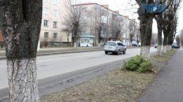 cropped original photo e1574237500543 260x146 - В центрі Житомира зріжуть дерева