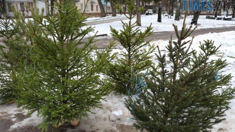 cropped yalynky 20 e1576230865277 - Скільки коштуватиме новорічна ялинка у Житомирі