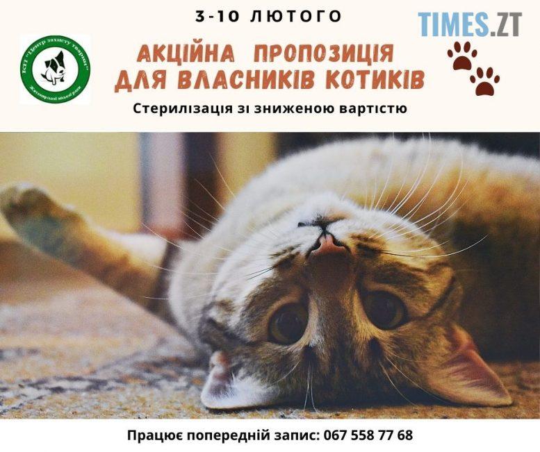 img1580466398 e1580469698226 - У Житомирі Центр захисту тварин пропонує акційну стерилізацію