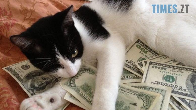 kot 0003 777x437 - Сьогодні долар подорожчав на 3 копійки. Курс валют та ціни на пальне в Житомирі
