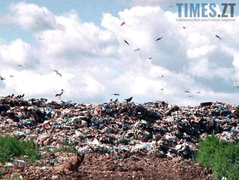 Проблема утилізації сміття в Житомирі | TIMES.ZT