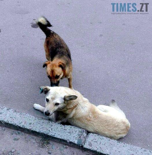 9 3 - «101 житомирський далматинець» або жорстокі реалії безпритульного собачого буття