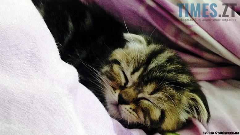 Проблема безсоння | TIMES.ZT