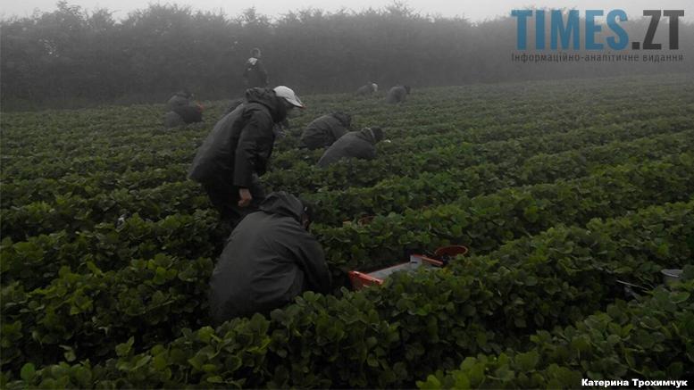 Робота для молоді | TIMES.ZT