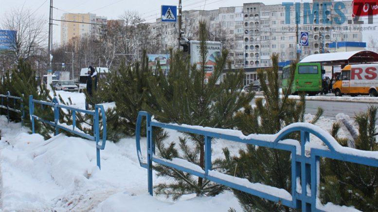 Photo 4 1 - Увага! «Банда» ялинок захопила Житомир
