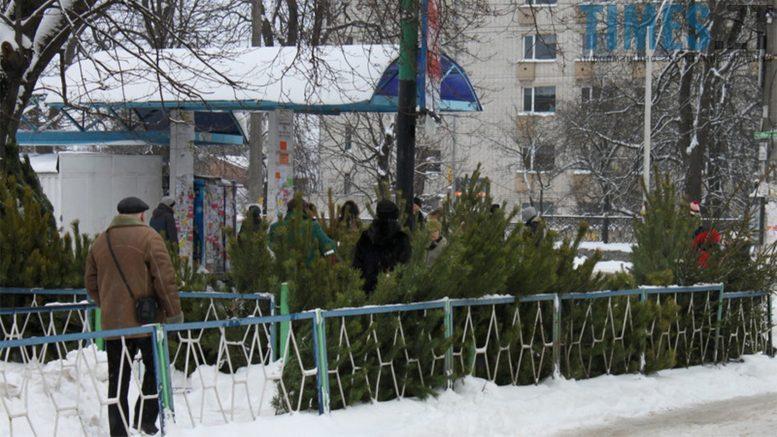 Photo 7 1 - Увага! «Банда» ялинок захопила Житомир