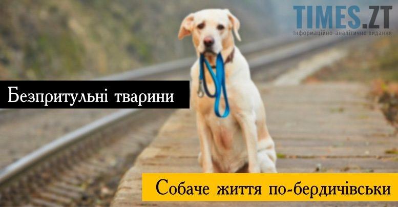 Безпритульні тварини в Бердичеві