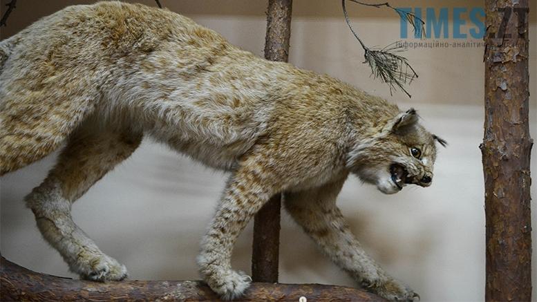 11 2 - Житомирський музей запропонував зробити селфі з опудалом дикої тварини