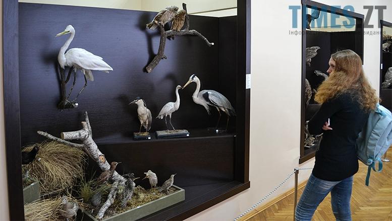 6 4 - Житомирський музей запропонував зробити селфі з опудалом дикої тварини
