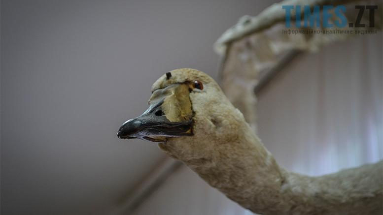 7 2 - Житомирський музей запропонував зробити селфі з опудалом дикої тварини