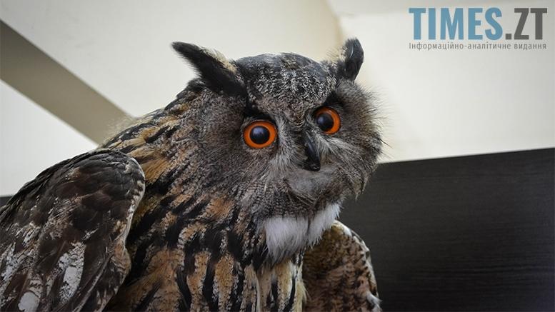 9 3 - Житомирський музей запропонував зробити селфі з опудалом дикої тварини