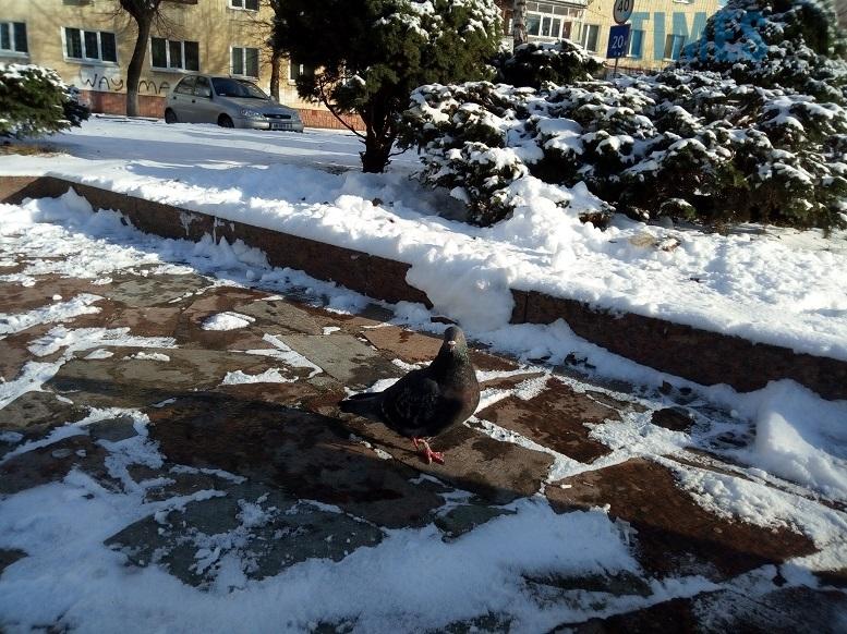 P80117 134347 edited - Головну ялинку Житомира тихо прибрали, не дочекавшись Водохреща