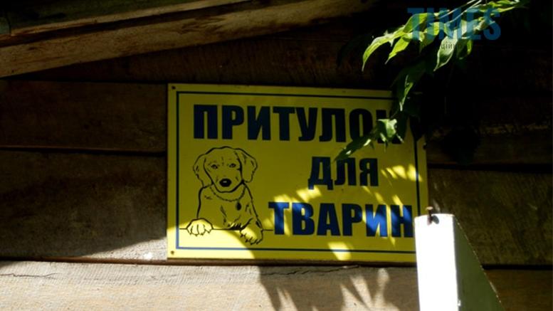Picture 1 - Безпритульні тварини: собаче життя по-бердичівськи