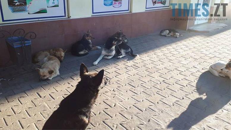 Picture 15 - Безпритульні тварини: собаче життя по-бердичівськи