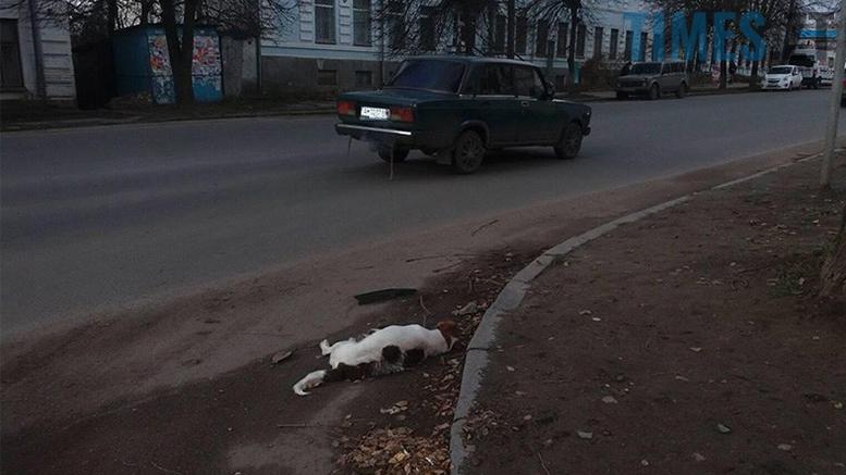 Picture 17 1 - Безпритульні тварини: собаче життя по-бердичівськи