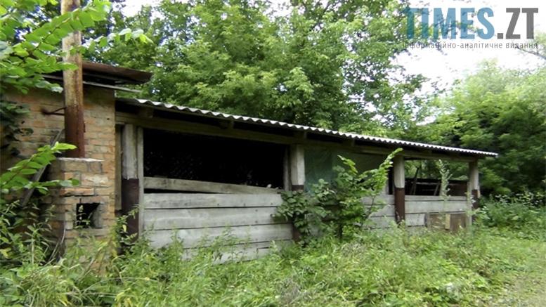 Picture 2 - Безпритульні тварини: собаче життя по-бердичівськи