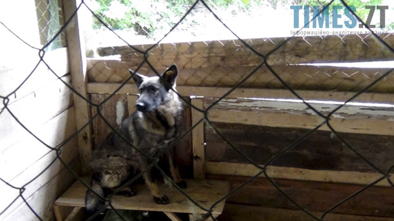 Picture 3 - Безпритульні тварини: собаче життя по-бердичівськи