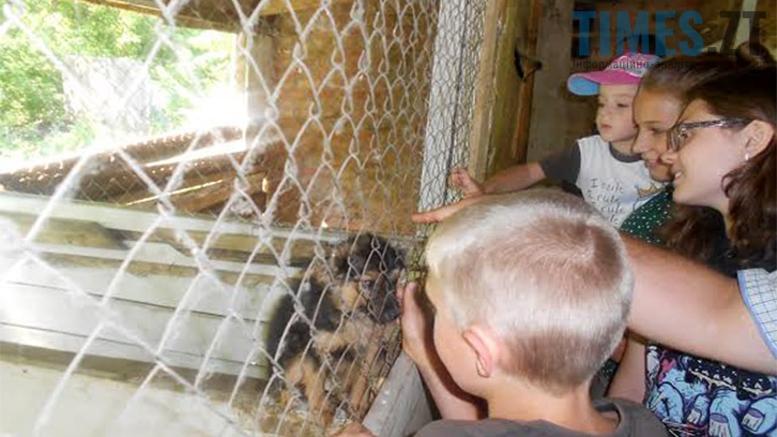 Picture 4 - Безпритульні тварини: собаче життя по-бердичівськи