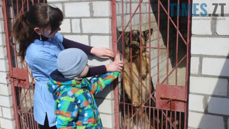 Picture 5 - Безпритульні тварини: собаче життя по-бердичівськи